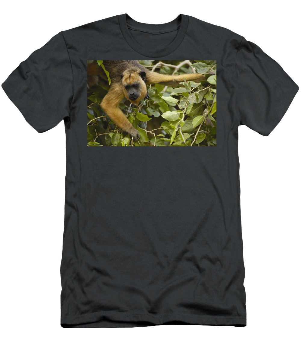 Feb0514 Men's T-Shirt (Athletic Fit) featuring the photograph Black Howler Monkey Female Pantanal by Pete Oxford