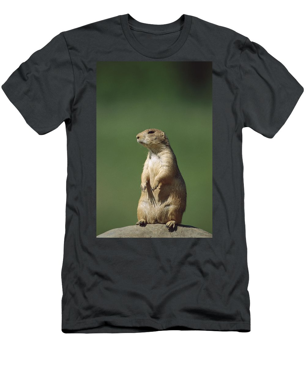 Feb0514 Men's T-Shirt (Athletic Fit) featuring the photograph Black-tailed Prairie Dog Sitting Upright by Konrad Wothe