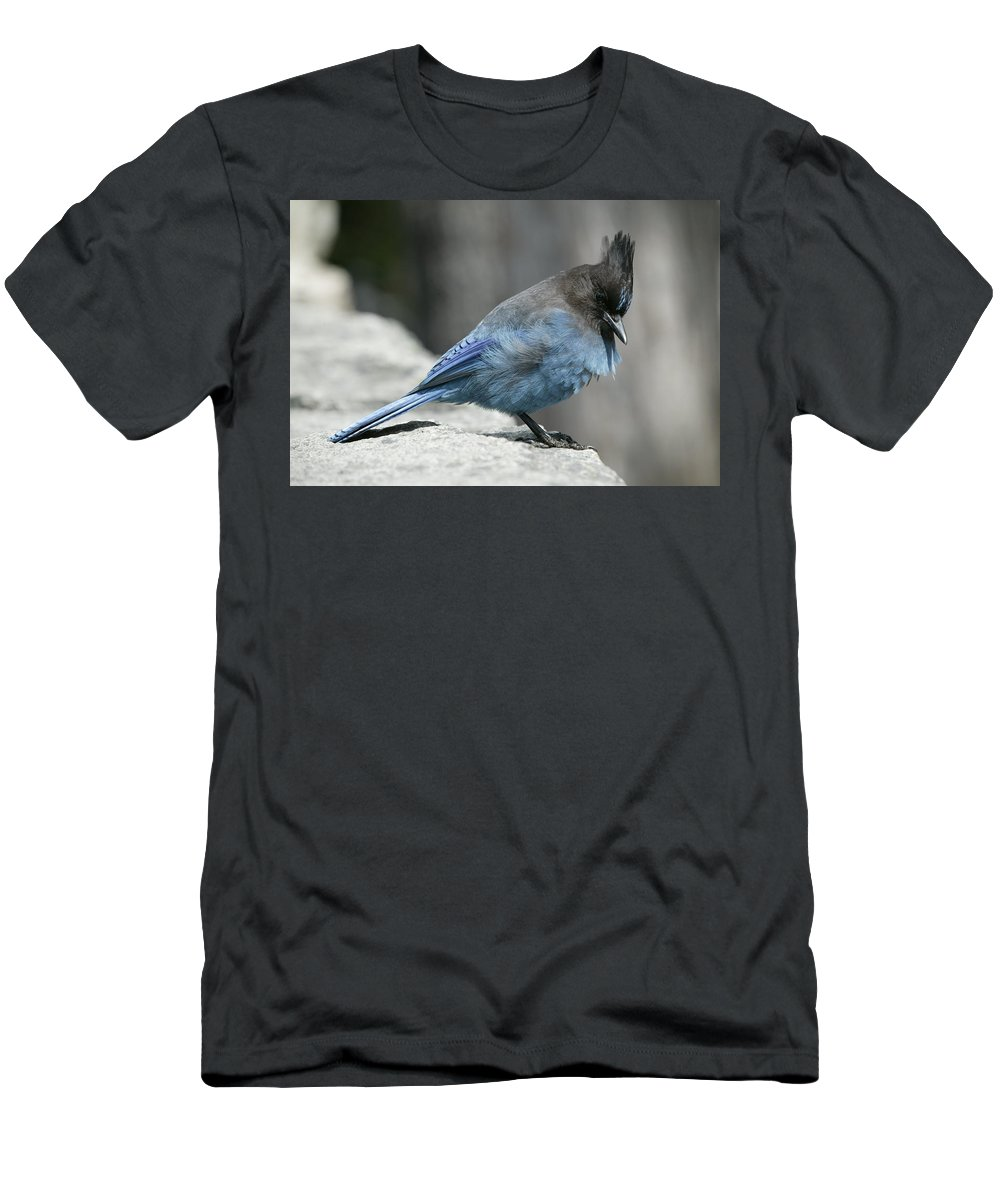 Bird Men's T-Shirt (Athletic Fit) featuring the photograph Blue Bird by Ian Mcadie