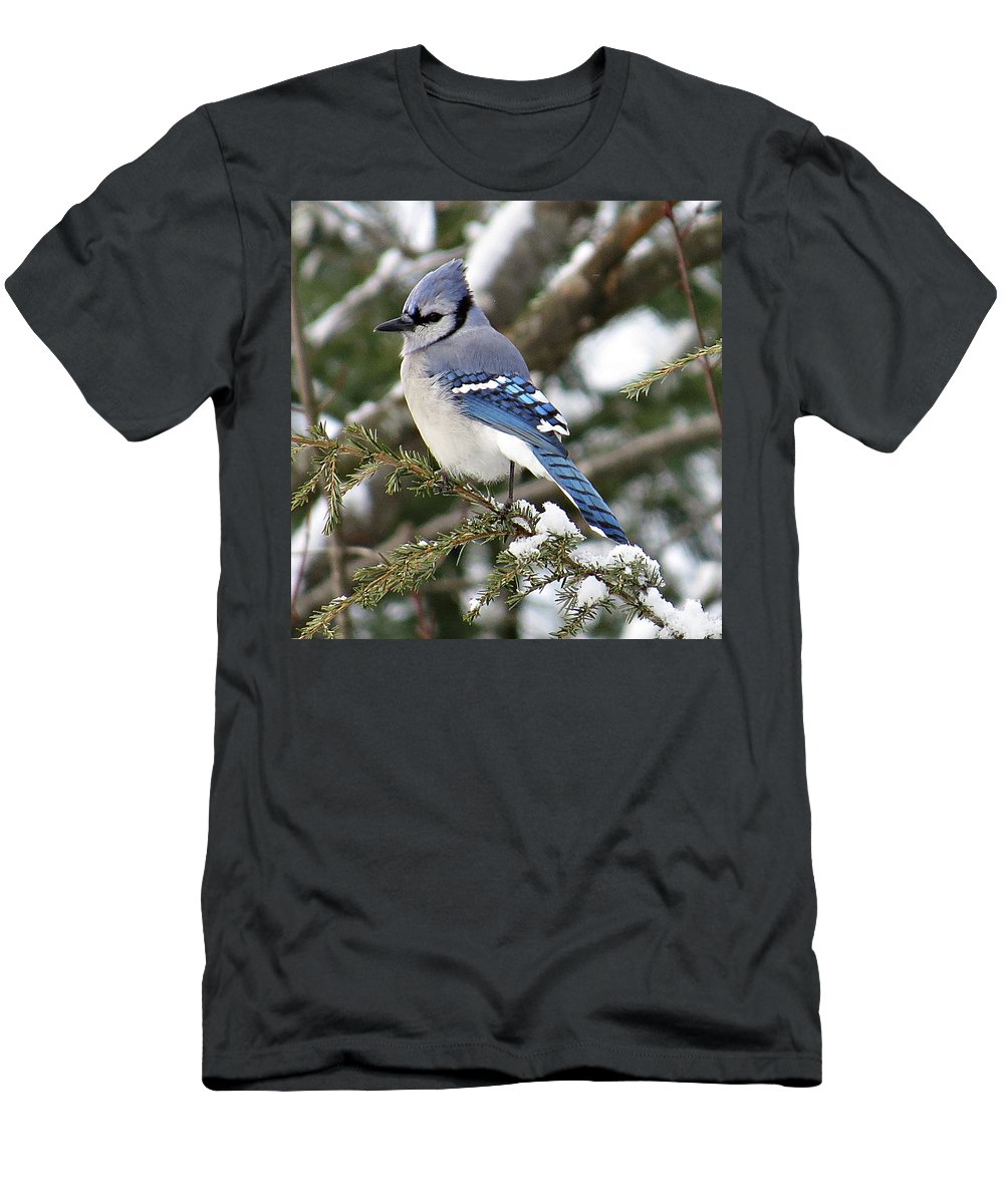 Blue Jay Men's T-Shirt (Athletic Fit) featuring the photograph Blue Jay On Hemlock by MTBobbins Photography