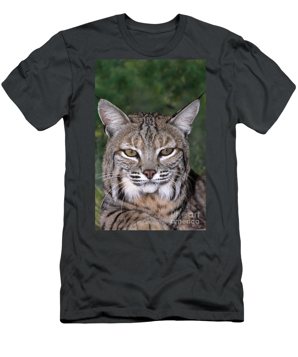 Bobcat Men's T-Shirt (Athletic Fit) featuring the photograph Bobcat Portrait Wildlife Rescue by Dave Welling