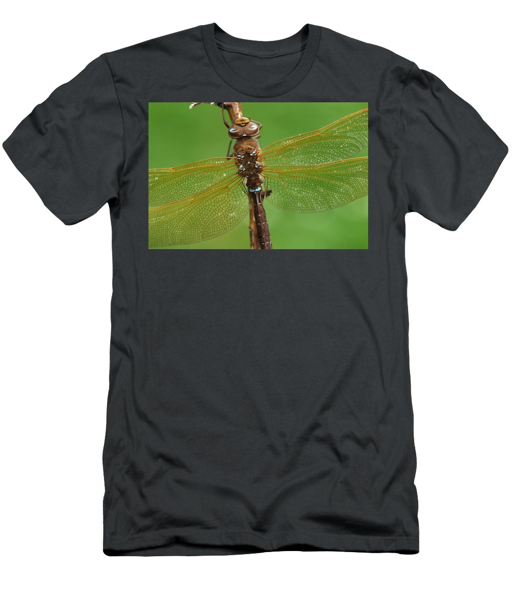 Feb0514 Men's T-Shirt (Athletic Fit) featuring the photograph Brown Hawker Dragonfly Switzerland by Thomas Marent
