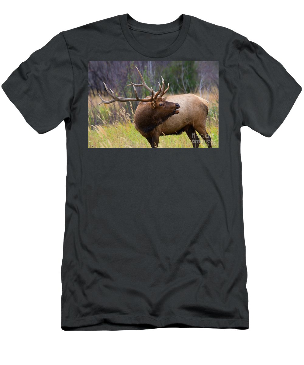Elk Men's T-Shirt (Athletic Fit) featuring the photograph Bugles All Around by Jim Garrison