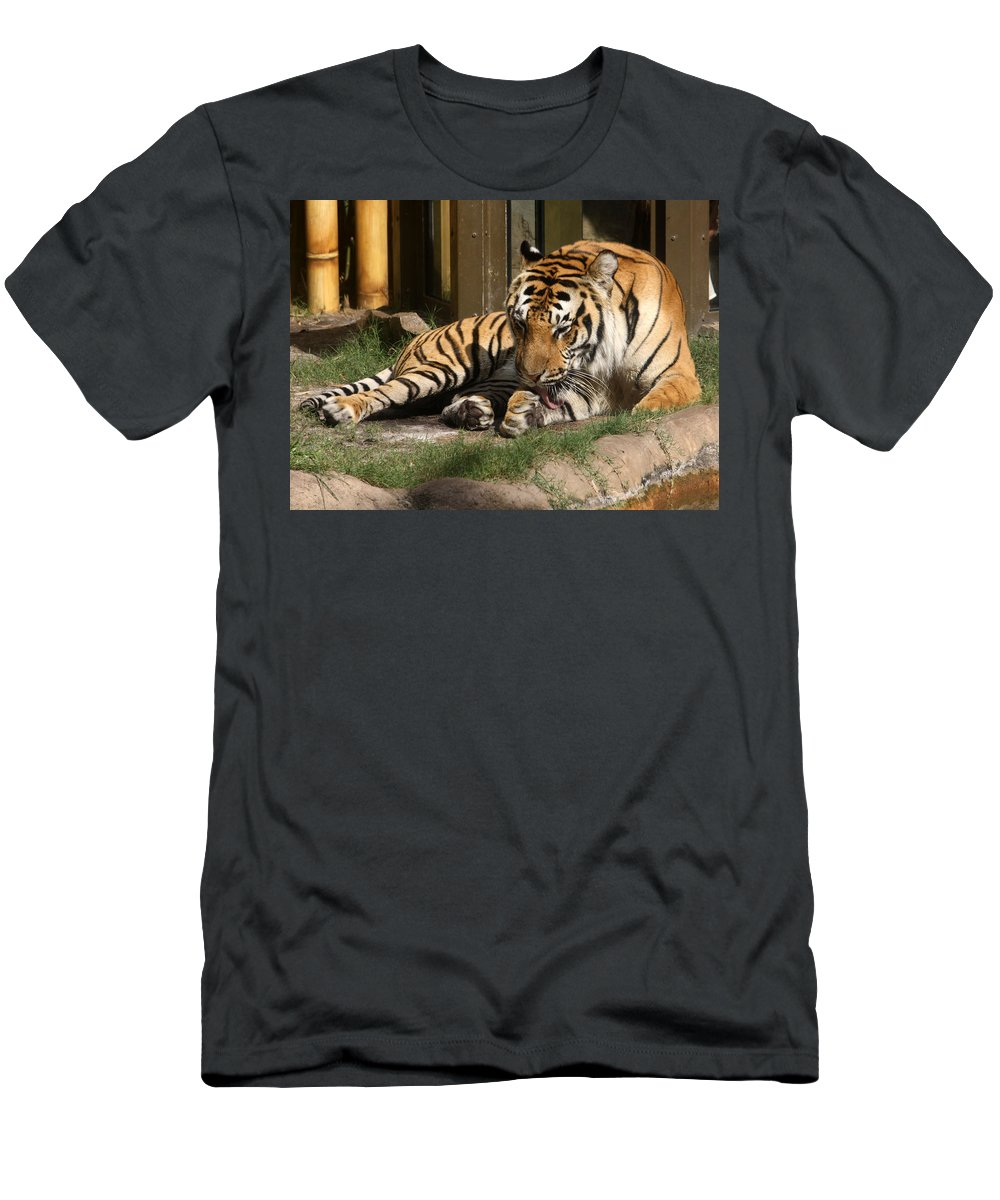 Tiger Men's T-Shirt (Athletic Fit) featuring the photograph Busch Tiger by David Nicholls
