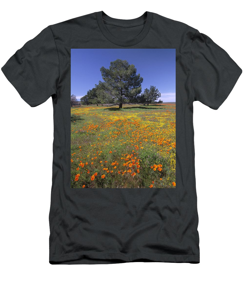 Feb0514 Men's T-Shirt (Athletic Fit) featuring the photograph California Poppy And Eriophyllum by Tim Fitzharris