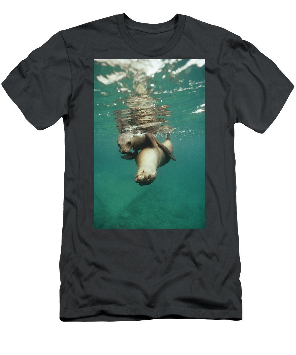 Feb0514 Men's T-Shirt (Athletic Fit) featuring the photograph California Sea Lions Playing Sea by Tui De Roy