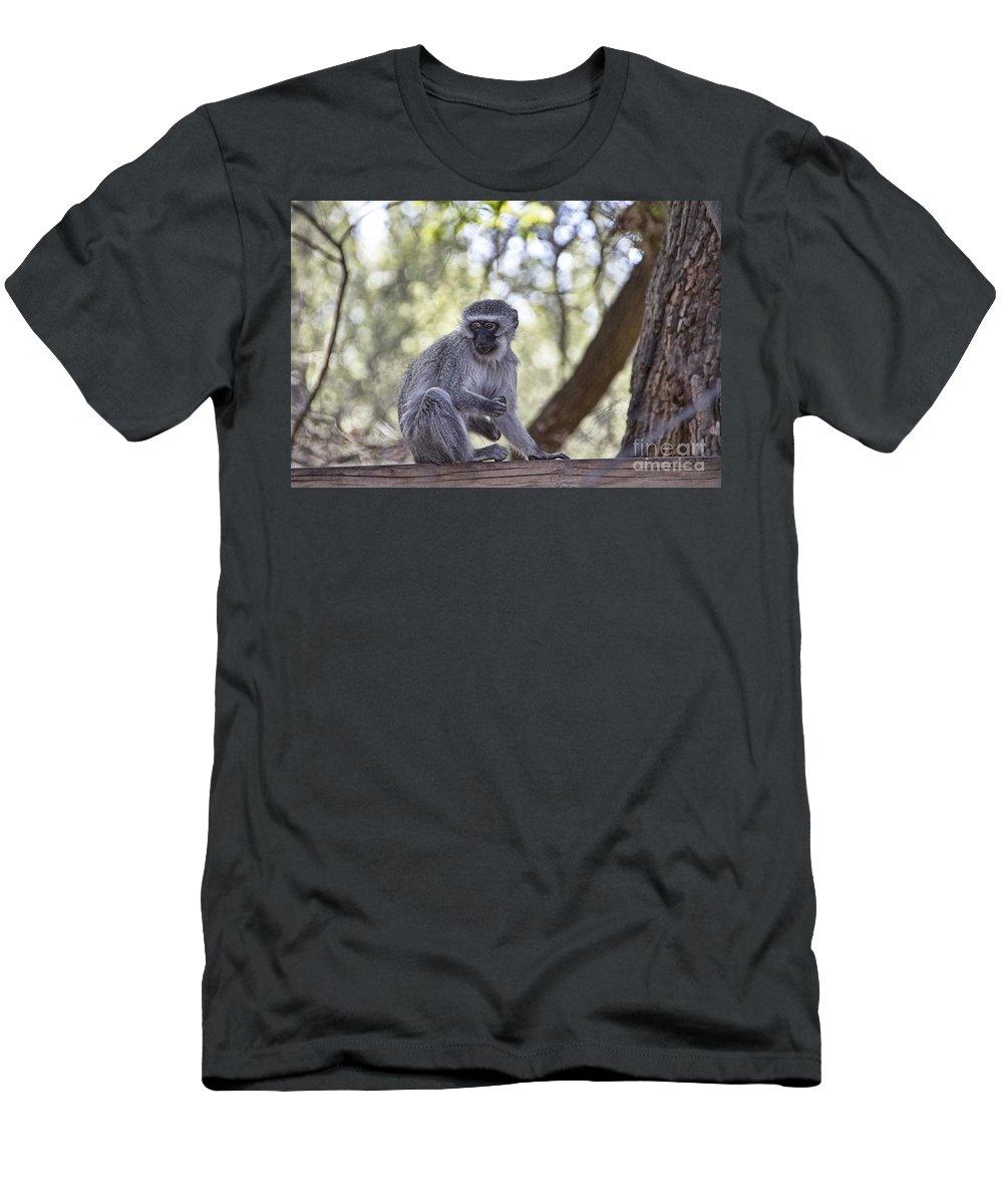 Vervet Monkey Men's T-Shirt (Athletic Fit) featuring the photograph Call Me Curious by Douglas Barnard