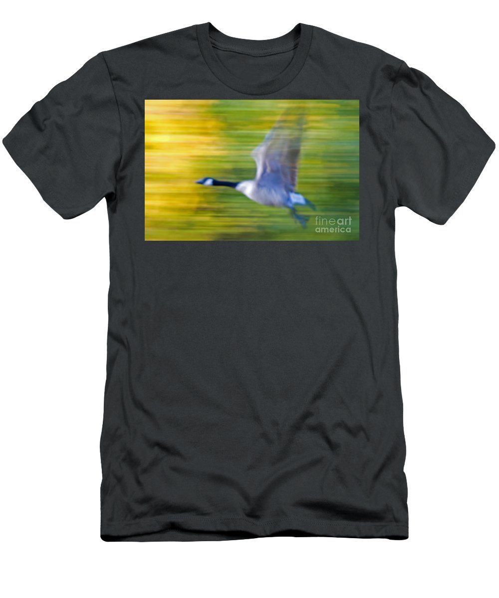 Goose Men's T-Shirt (Athletic Fit) featuring the photograph Canadian In Flight by Bob Mintie