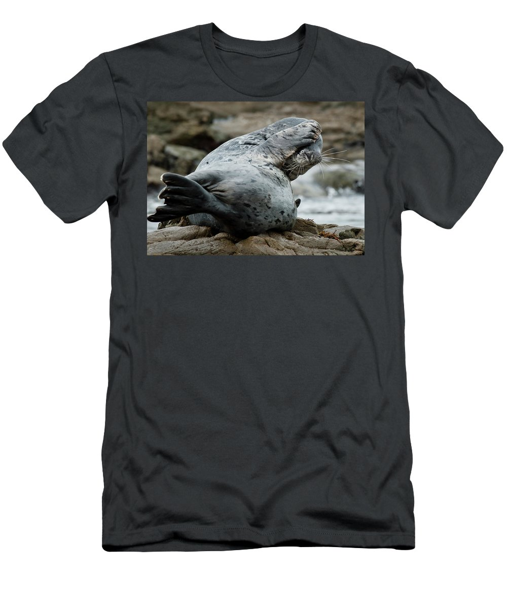 Seal Men's T-Shirt (Athletic Fit) featuring the photograph Can't Bear To Look by Greg Nyquist