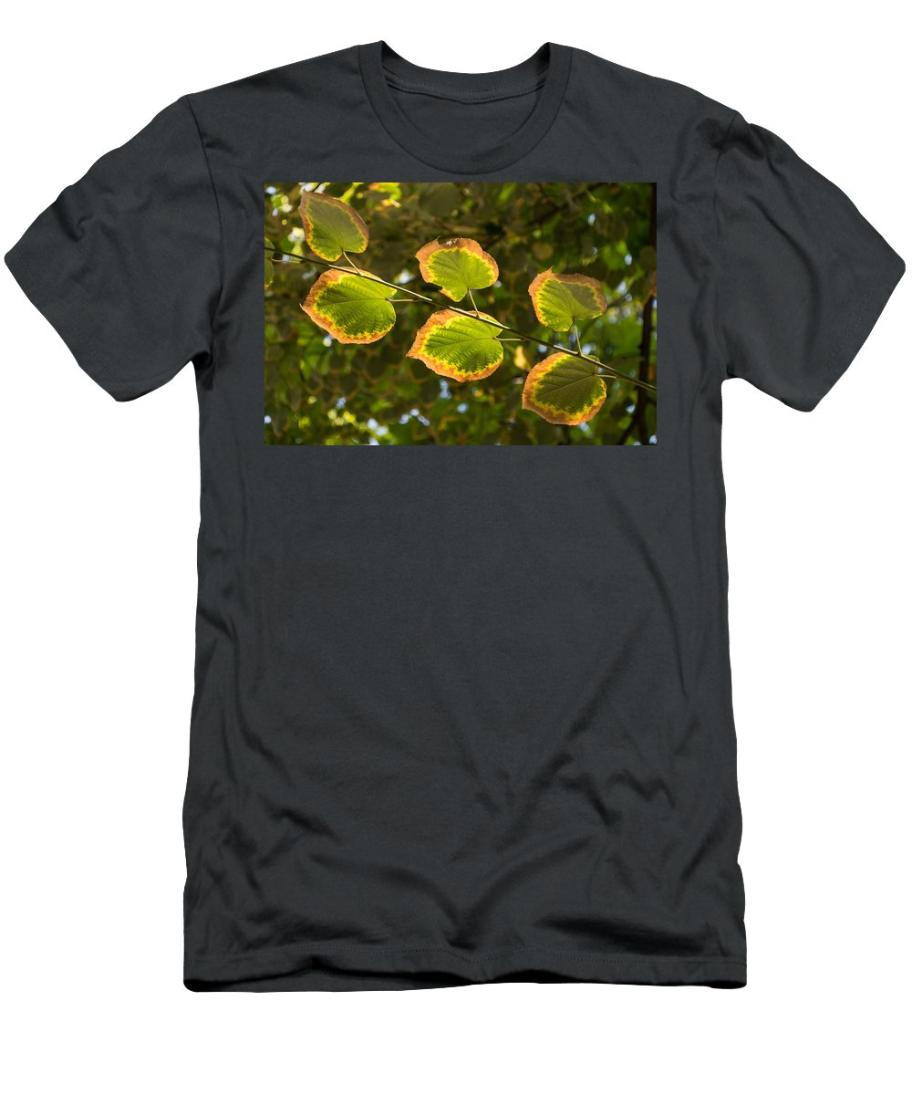 Fall Men's T-Shirt (Athletic Fit) featuring the photograph Can't Decide What Color To Be by Georgia Mizuleva