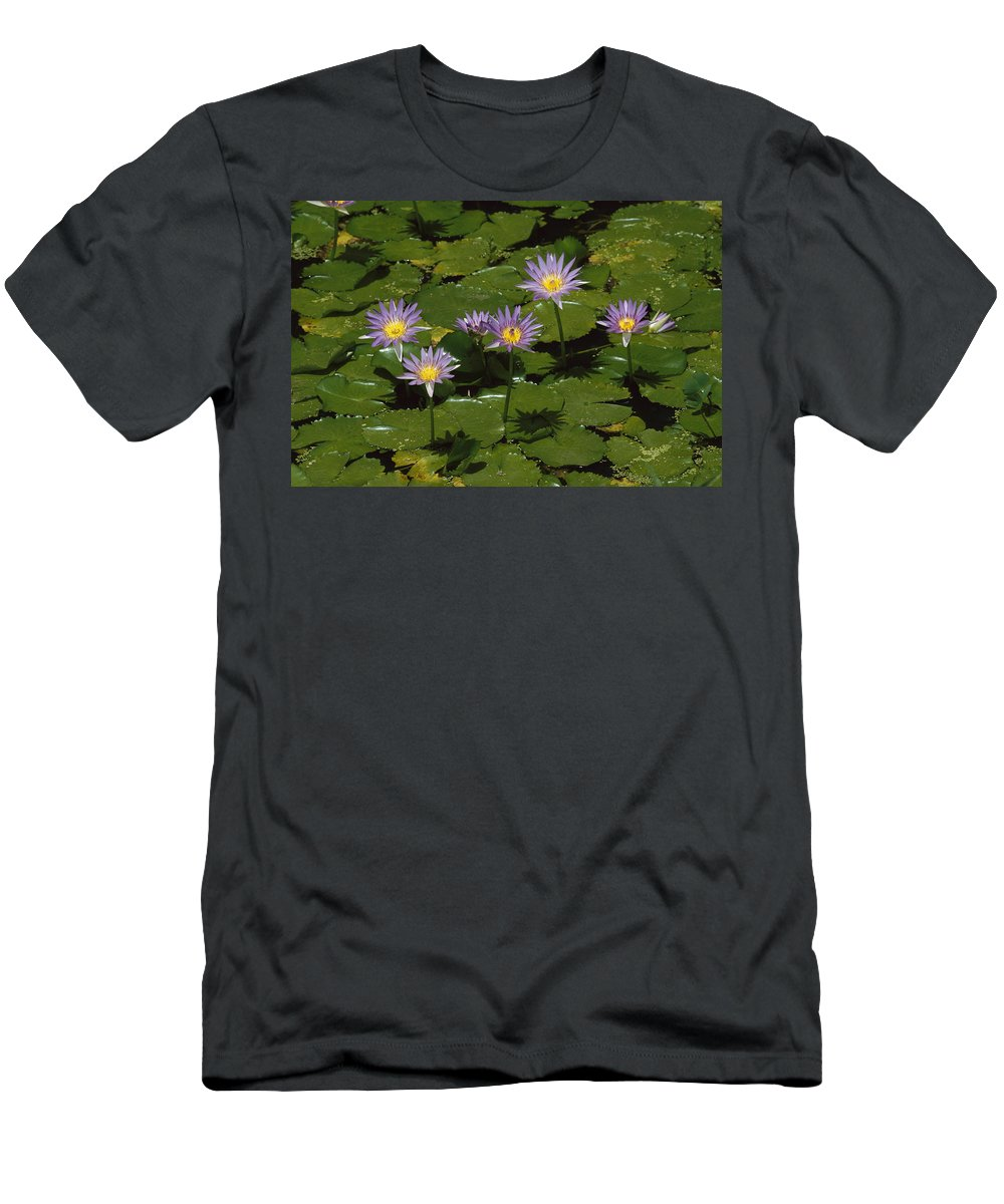 Feb0514 Men's T-Shirt (Athletic Fit) featuring the photograph Cape Blue Water-lily Group Blooming by Konrad Wothe