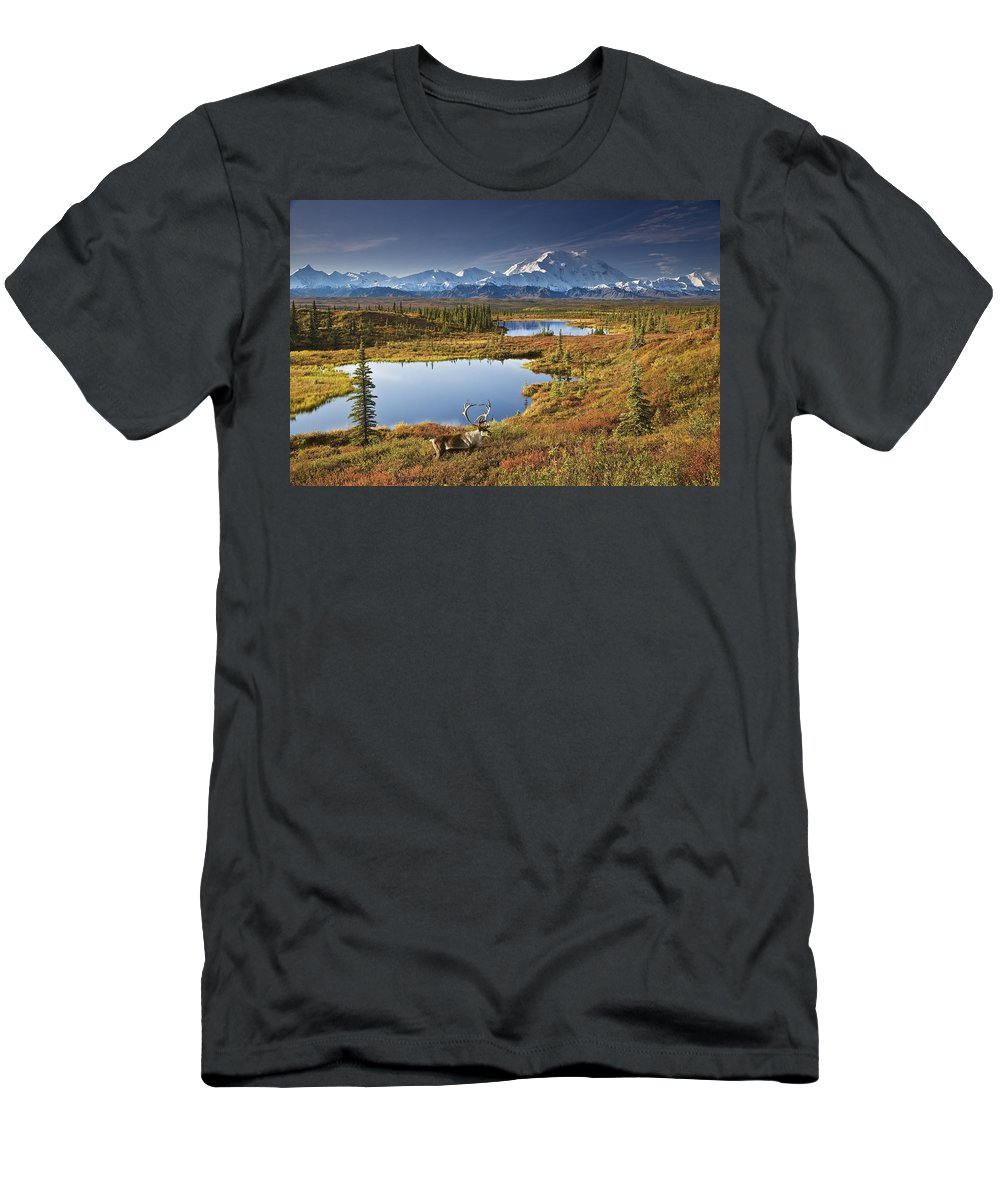 Adult Men's T-Shirt (Athletic Fit) featuring the photograph Caribou On Tundra In Denali by John R DeLapp