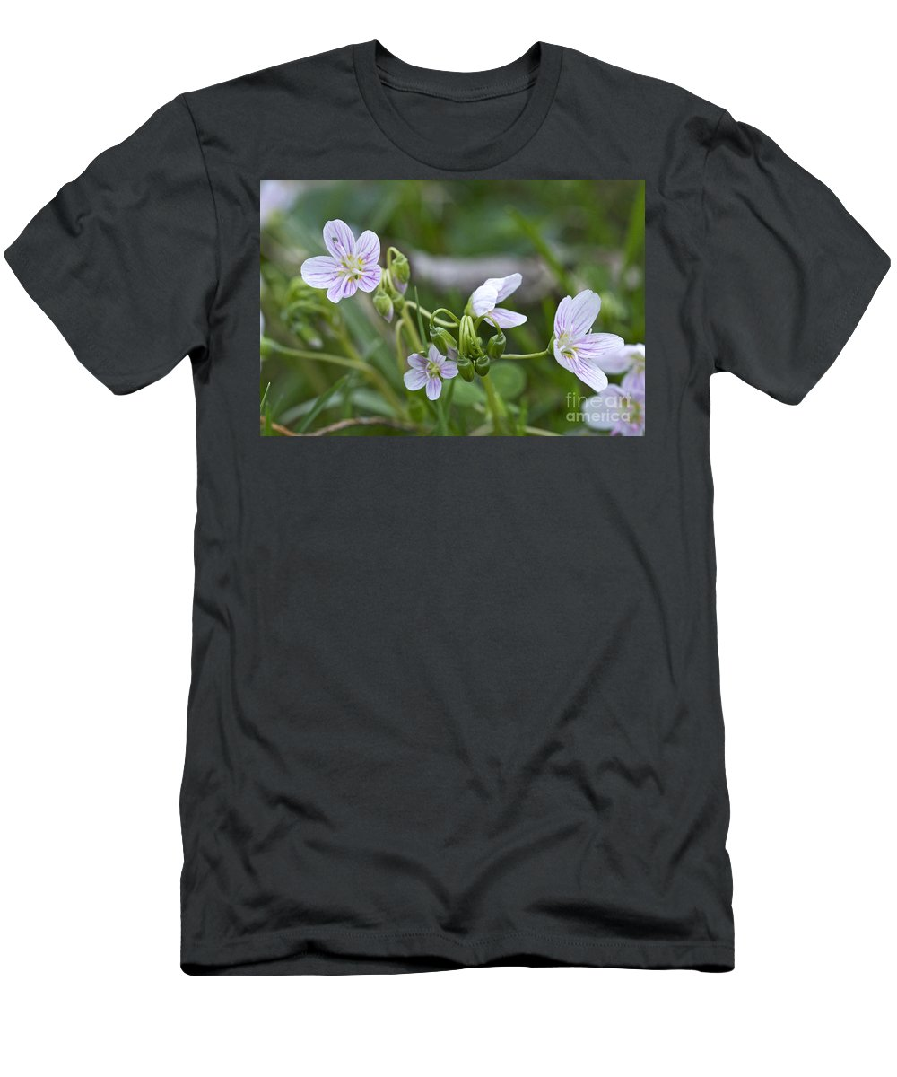 carolina Spring Beauty Men's T-Shirt (Athletic Fit) featuring the photograph Carolina Spring Beauty - Wide-leaved Spring Beauty - Claytonia Caroliniana by Mother Nature