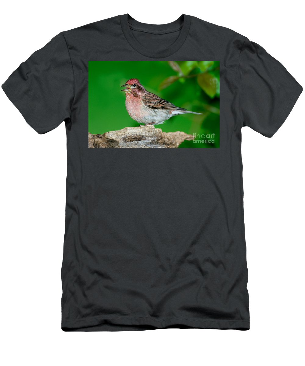 Fauna Men's T-Shirt (Athletic Fit) featuring the photograph Cassins Finch Carpodacus Cassinii by Anthony Mercieca