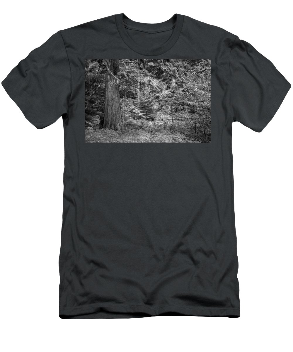 Glacier National Park Men's T-Shirt (Athletic Fit) featuring the photograph Cedar Along The Trail Of Cedars Glacier National Park Bw by Rich Franco
