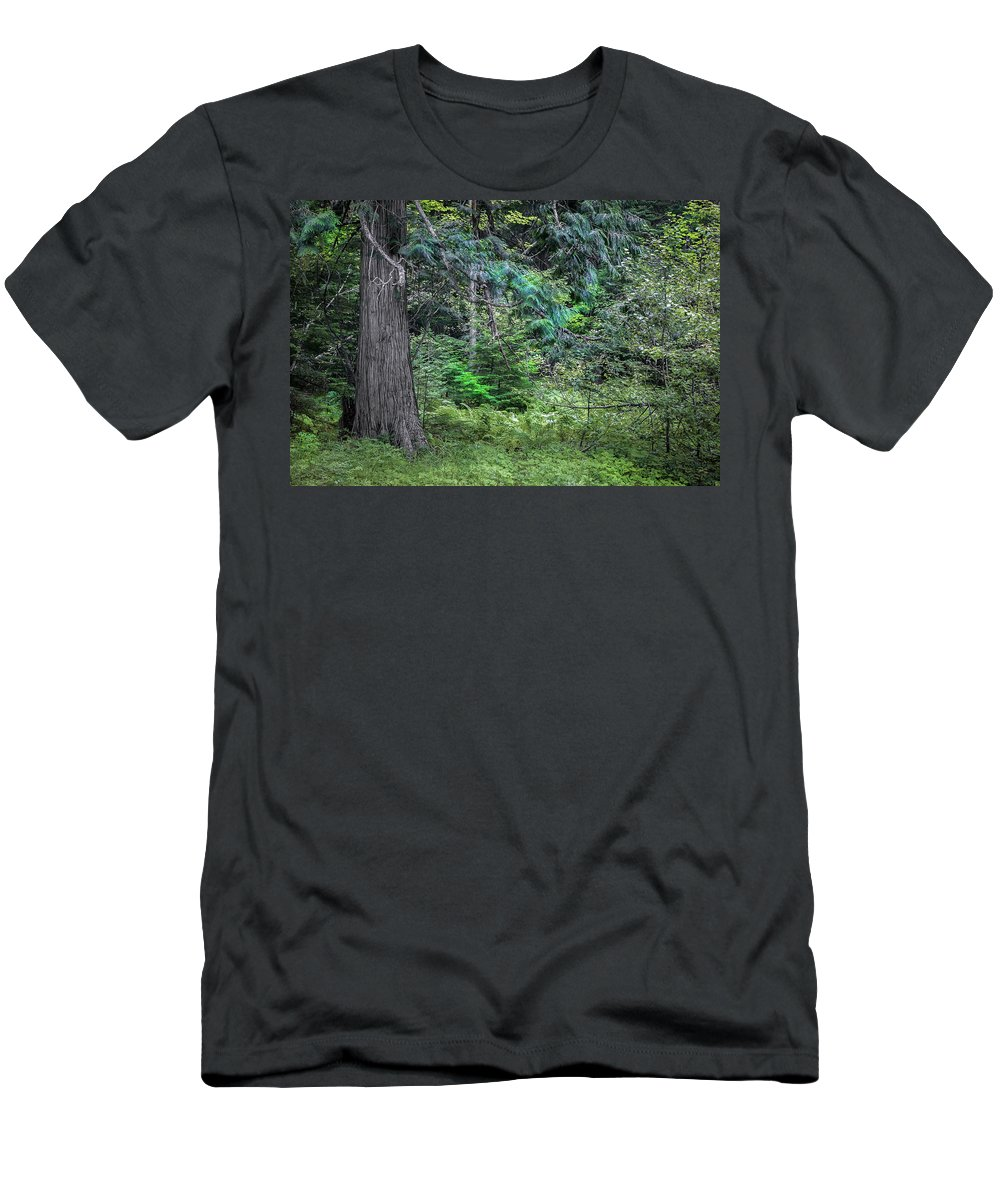 Glacier National Park Men's T-Shirt (Athletic Fit) featuring the photograph Cedar Along The Trail Of Cedars Glacier National Park by Rich Franco