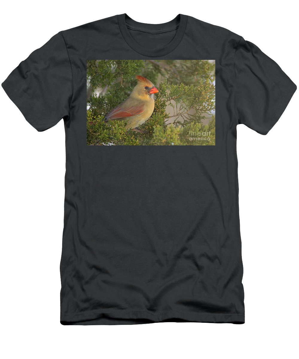 Northern Men's T-Shirt (Athletic Fit) featuring the photograph Cedar Perch by Joe Geraci