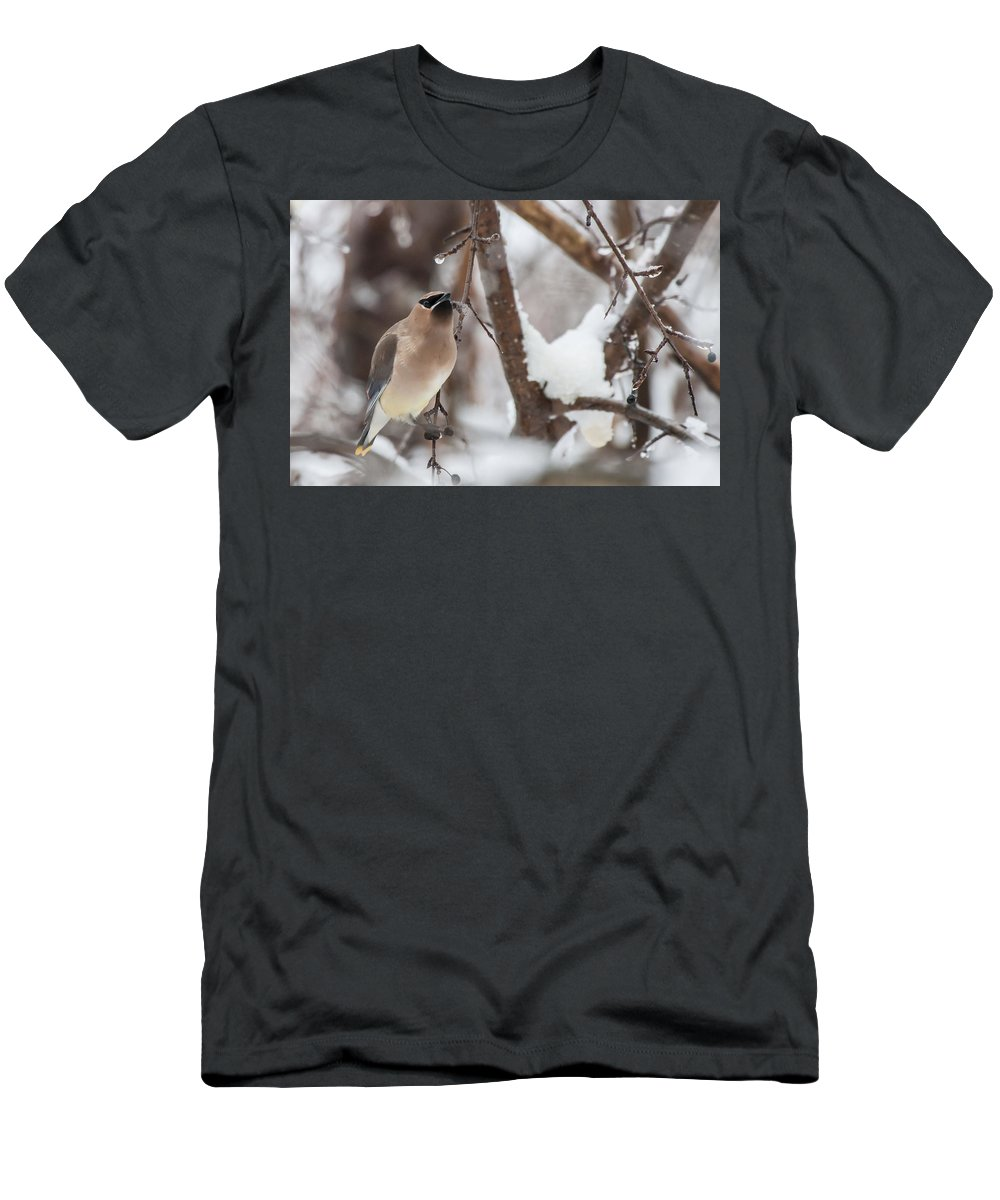 image By Jeff Folger Men's T-Shirt (Athletic Fit) featuring the photograph Cedar Waxwing In Winter by Jeff Folger