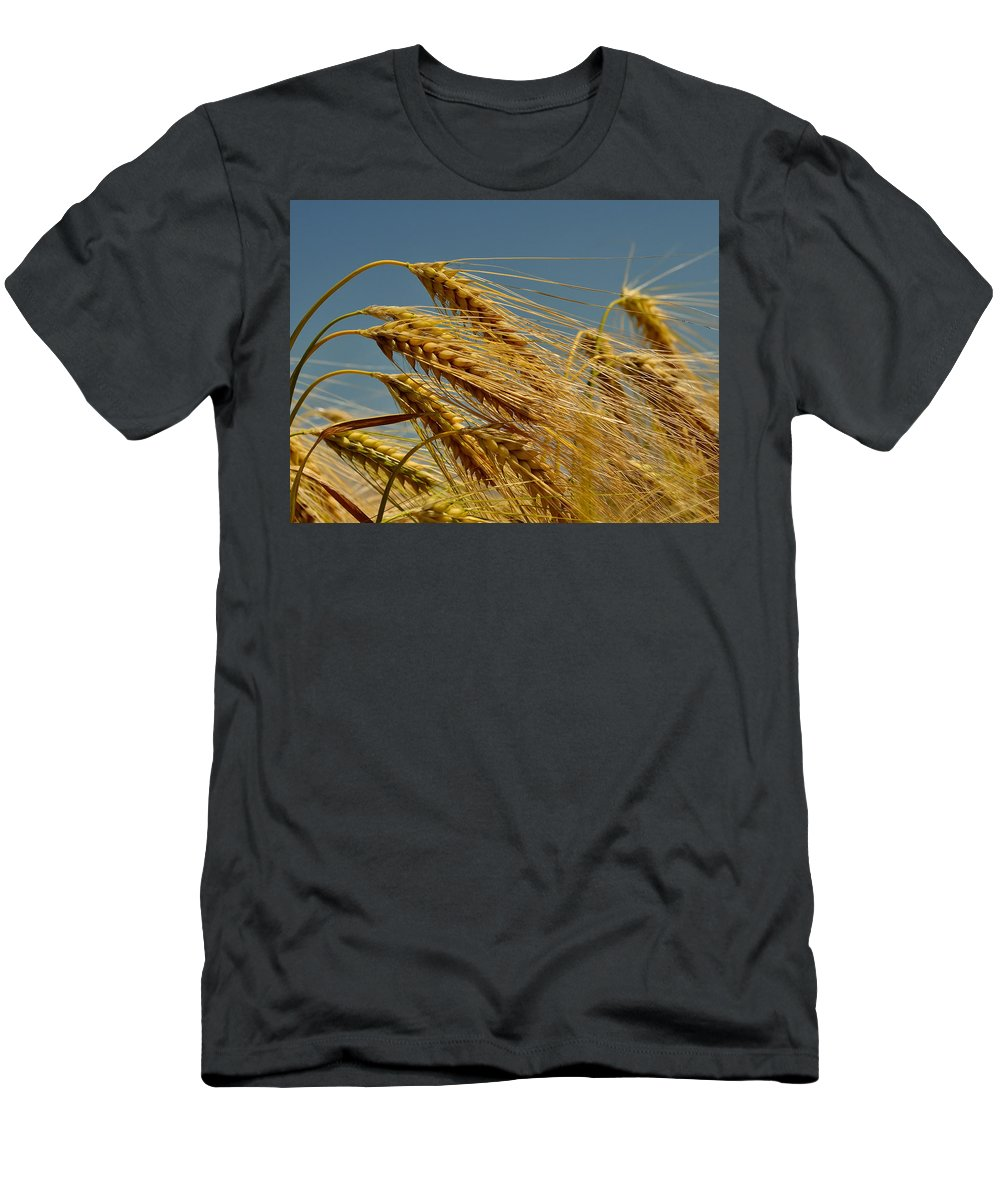 Wheat Men's T-Shirt (Athletic Fit) featuring the photograph Cereals by TouTouke A Y