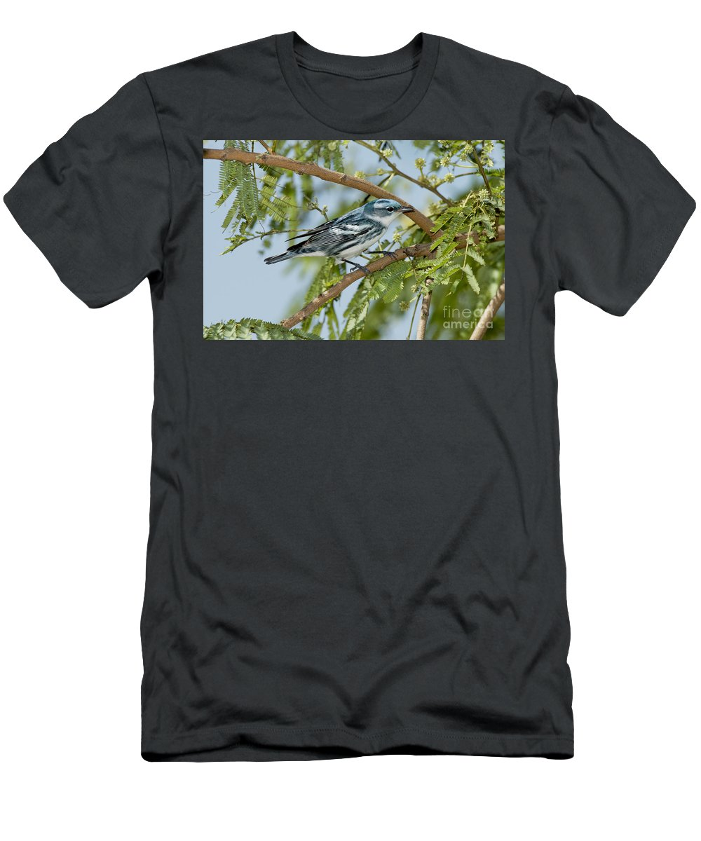 Cerulean Warbler Men's T-Shirt (Athletic Fit) featuring the photograph Cerulean Warbler by Anthony Mercieca