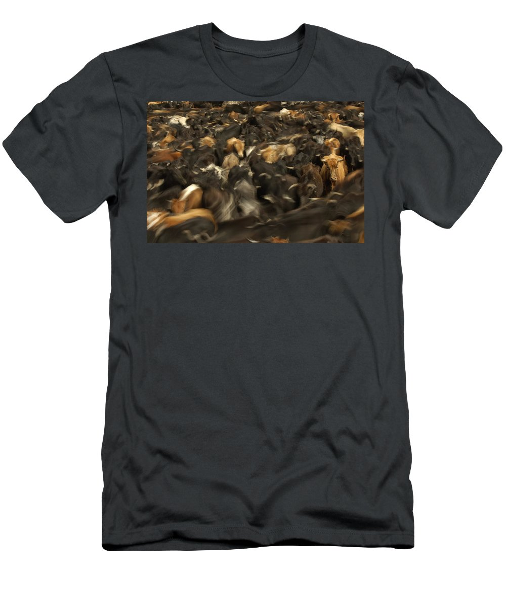 Feb0514 Men's T-Shirt (Athletic Fit) featuring the photograph Chagras Round-up Cattle Ecuador by Pete Oxford