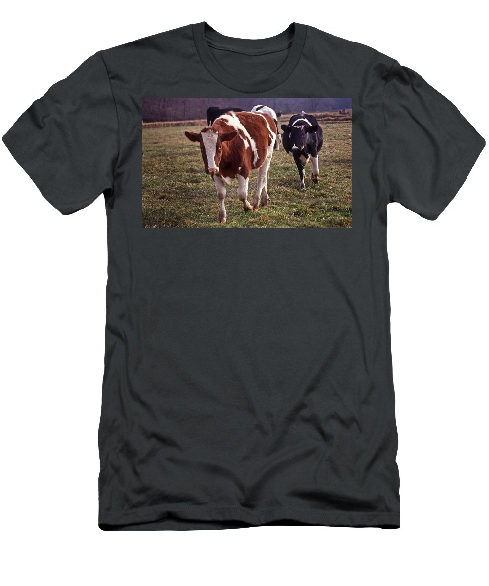 Cow Men's T-Shirt (Athletic Fit) featuring the photograph Charging by Skip Willits