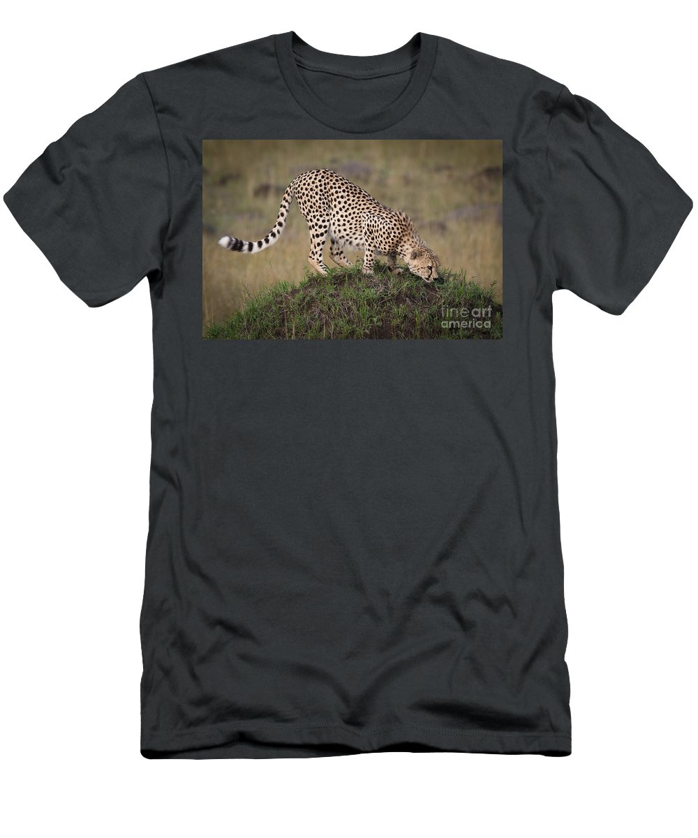 Acinonyx Jubatus Men's T-Shirt (Athletic Fit) featuring the photograph Cheetah On Termite Mound by John Shaw
