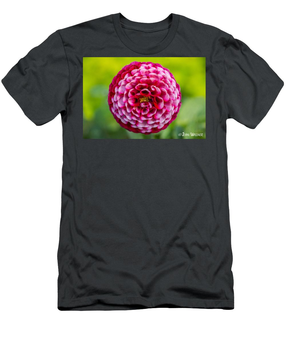 Chick A Dee Men's T-Shirt (Athletic Fit) featuring the photograph Chick A Dee Dahlia by Joan Wallner