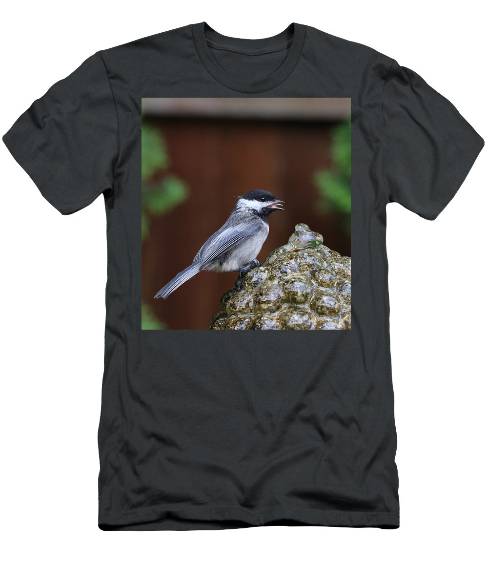 Chickadee Men's T-Shirt (Athletic Fit) featuring the photograph Chickadee by Paul Fell