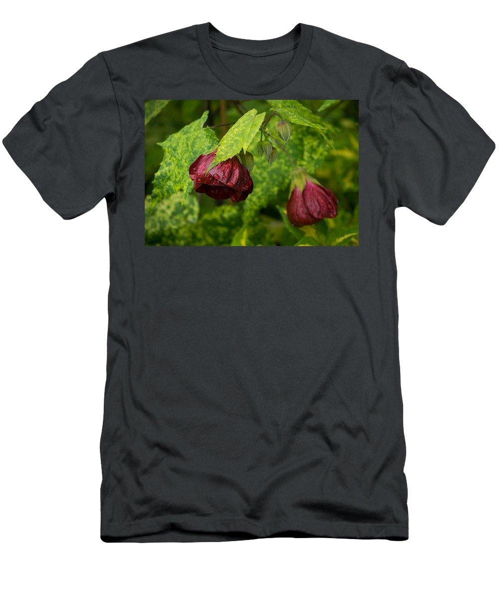 Hibiscus Men's T-Shirt (Athletic Fit) featuring the photograph Chinese Lanterns Refreshed By The Rain by Georgia Mizuleva