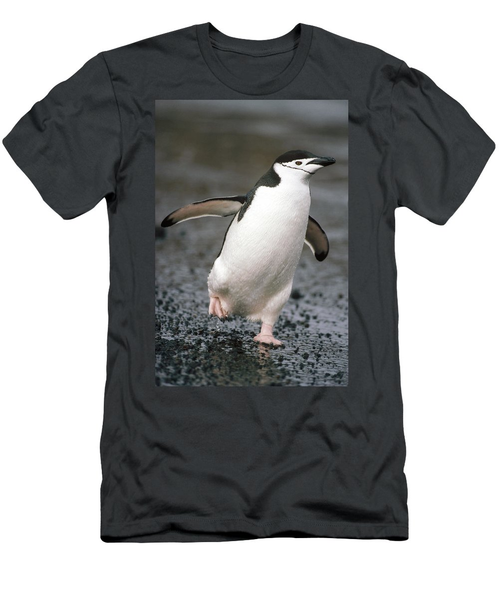 Feb0514 Men's T-Shirt (Athletic Fit) featuring the photograph Chinstrap Penguin Deception Isl by Tui De Roy