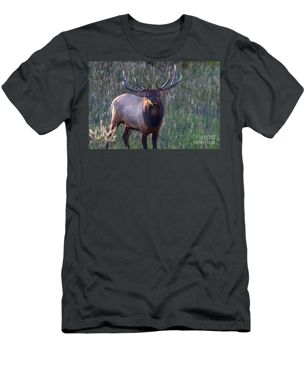 Elk Men's T-Shirt (Athletic Fit) featuring the photograph A Subtle Warning by Jim Garrison
