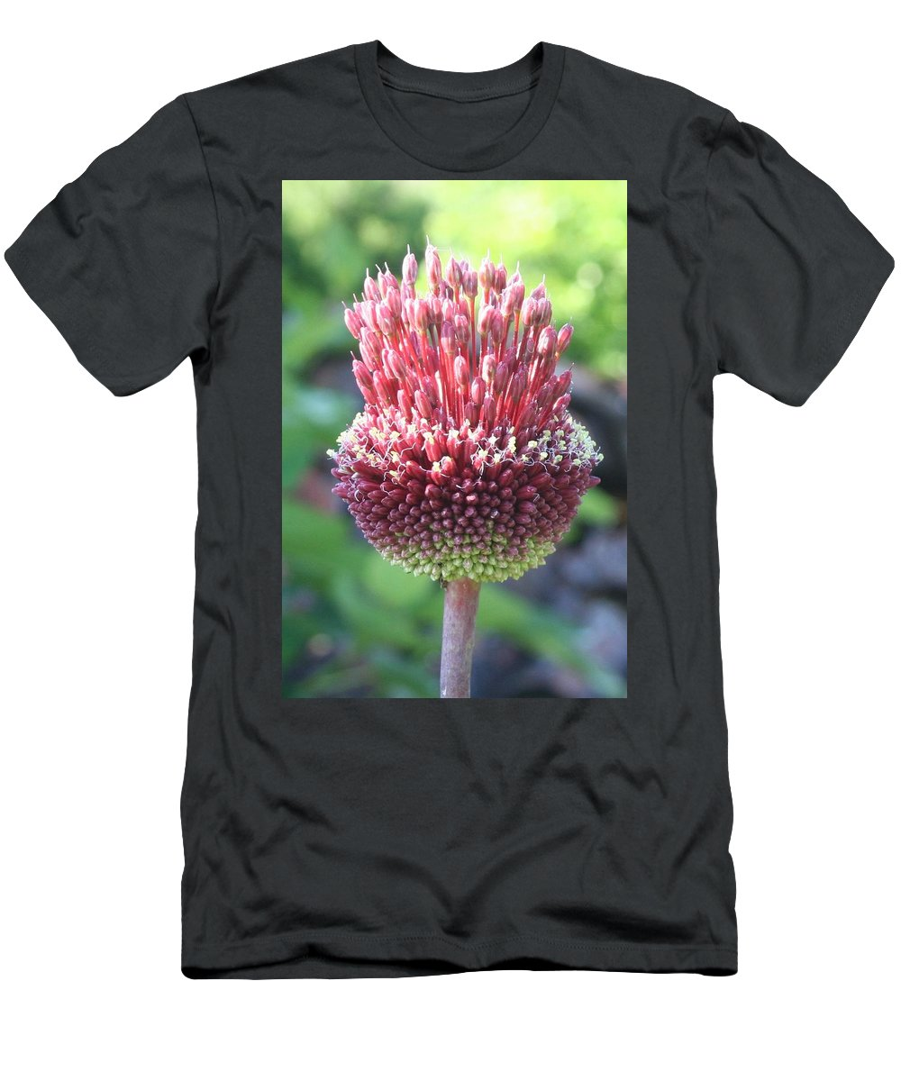 Allium Sphaerocephalon Men's T-Shirt (Athletic Fit) featuring the photograph Close Up Of An Ornamental Onion Or Drumstick Allium by Taiche Acrylic Art