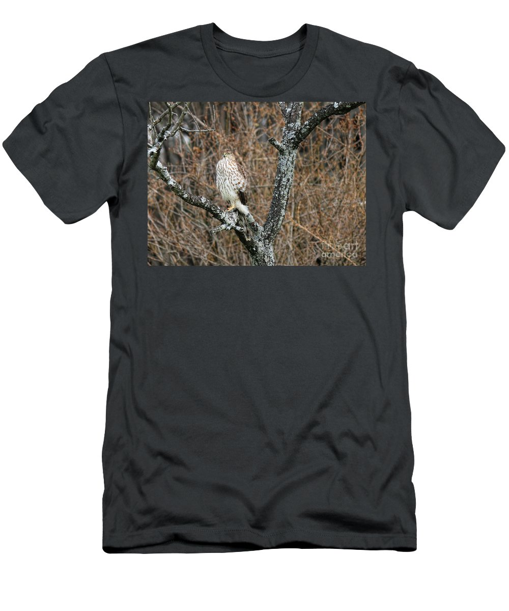 Cooper's Hawk Men's T-Shirt (Athletic Fit) featuring the photograph Coopers Hawk 0741 by Jack Schultz