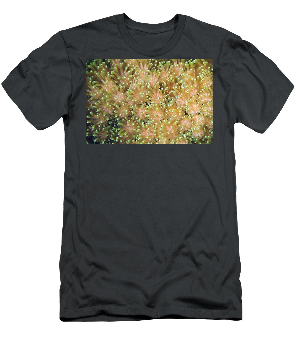 Feb0514 Men's T-Shirt (Athletic Fit) featuring the photograph Coral Polyps by Ingo Arndt
