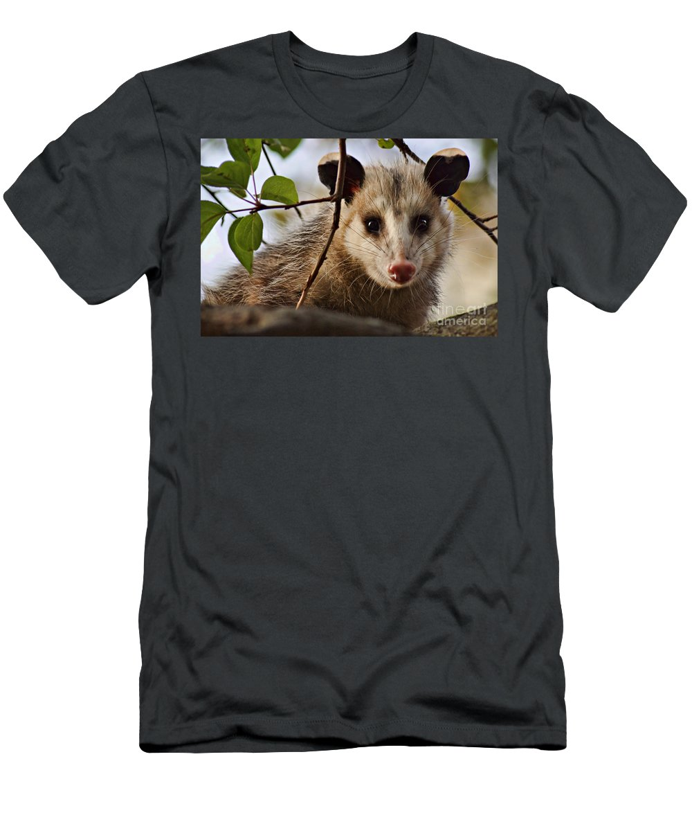Possum Men's T-Shirt (Athletic Fit) featuring the photograph Coucou - Close-up by Nikolyn McDonald
