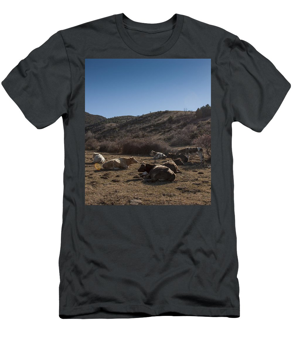 Cow Men's T-Shirt (Athletic Fit) featuring the photograph Cow by Antonio Macias Marin