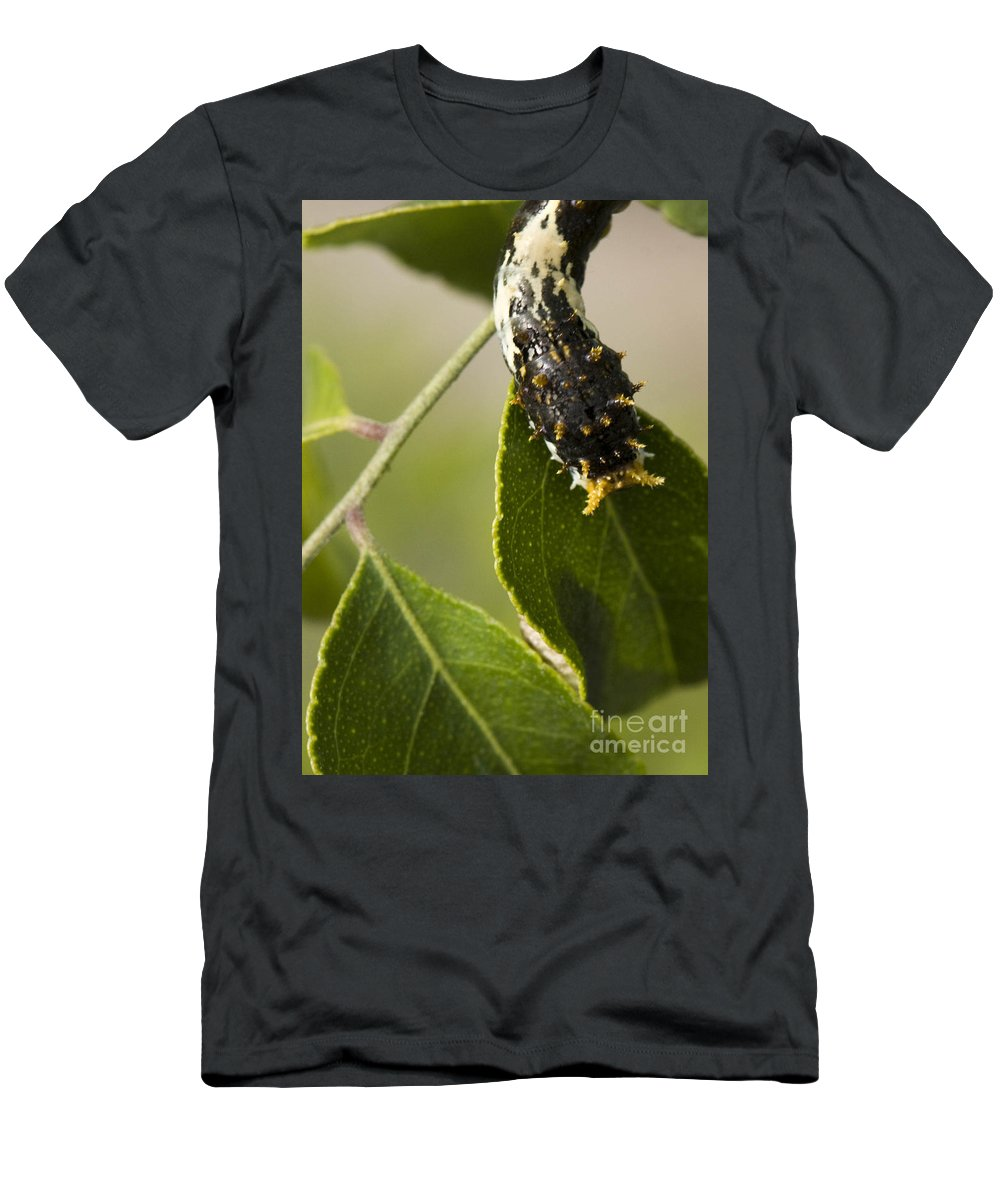 Caterpillar Men's T-Shirt (Athletic Fit) featuring the photograph Crawling For Food by Christina Gupfinger
