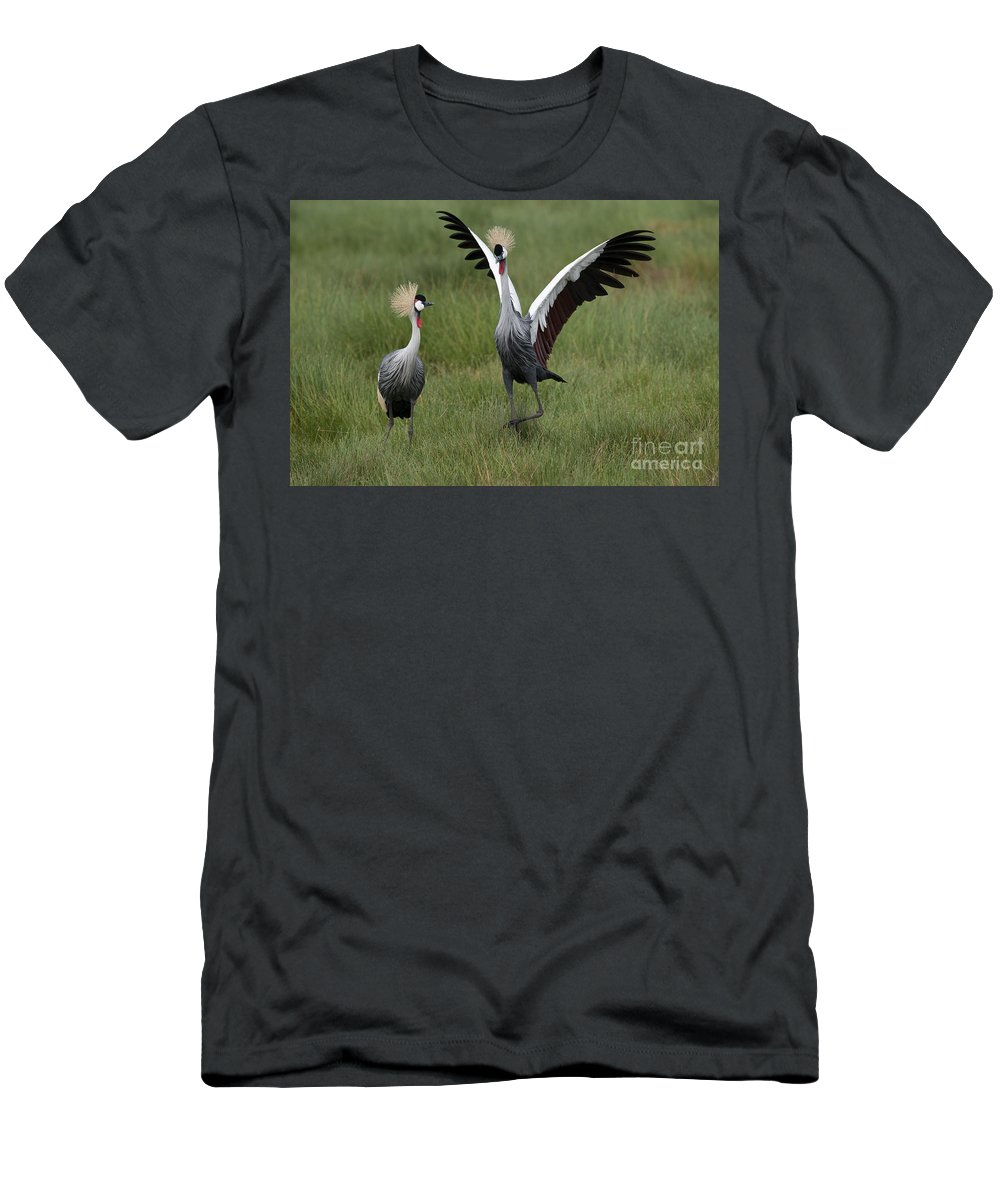 Africa Men's T-Shirt (Athletic Fit) featuring the photograph Crowned Cane Courtship Display by John Shaw