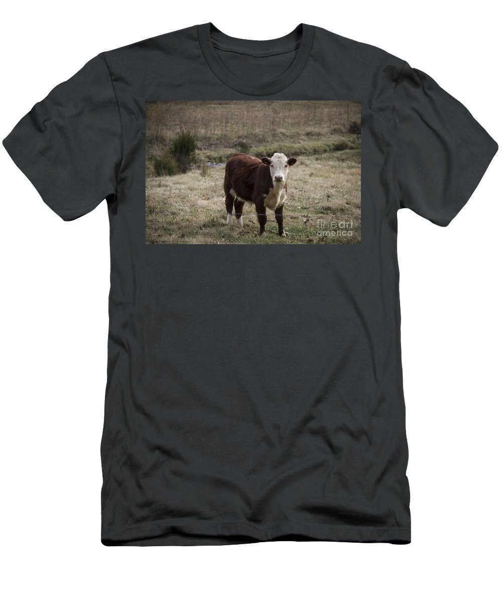Cow Men's T-Shirt (Athletic Fit) featuring the photograph Curious by Teresa Mucha