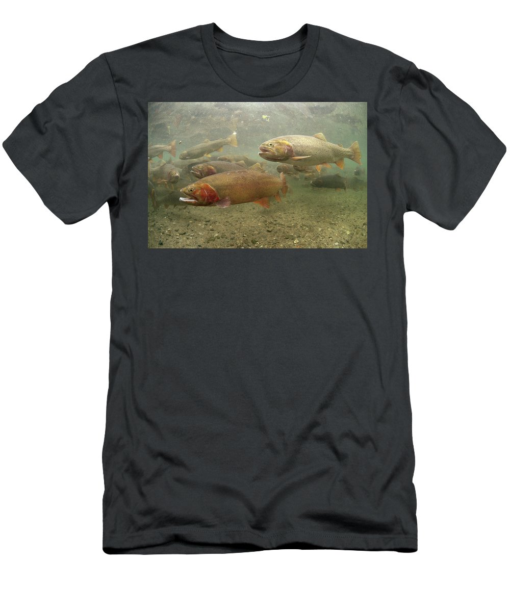 Feb0514 Men's T-Shirt (Athletic Fit) featuring the photograph Cutthroat Trout In The Spring Idaho by Michael Quinton