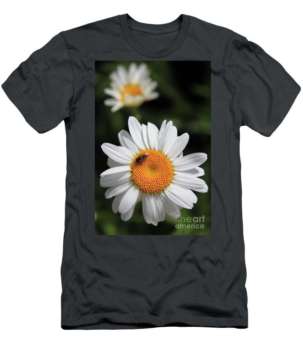 Reid Callaway Flower Men's T-Shirt (Athletic Fit) featuring the photograph Daisy Bee Nice by Reid Callaway