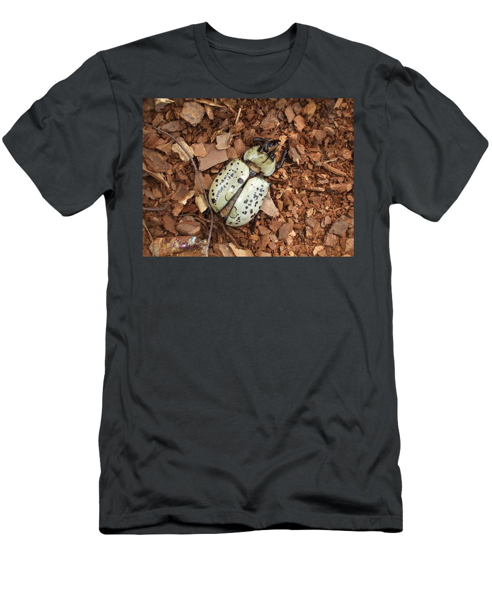 Bug Men's T-Shirt (Athletic Fit) featuring the photograph Dead Bug by Lisa Wormell