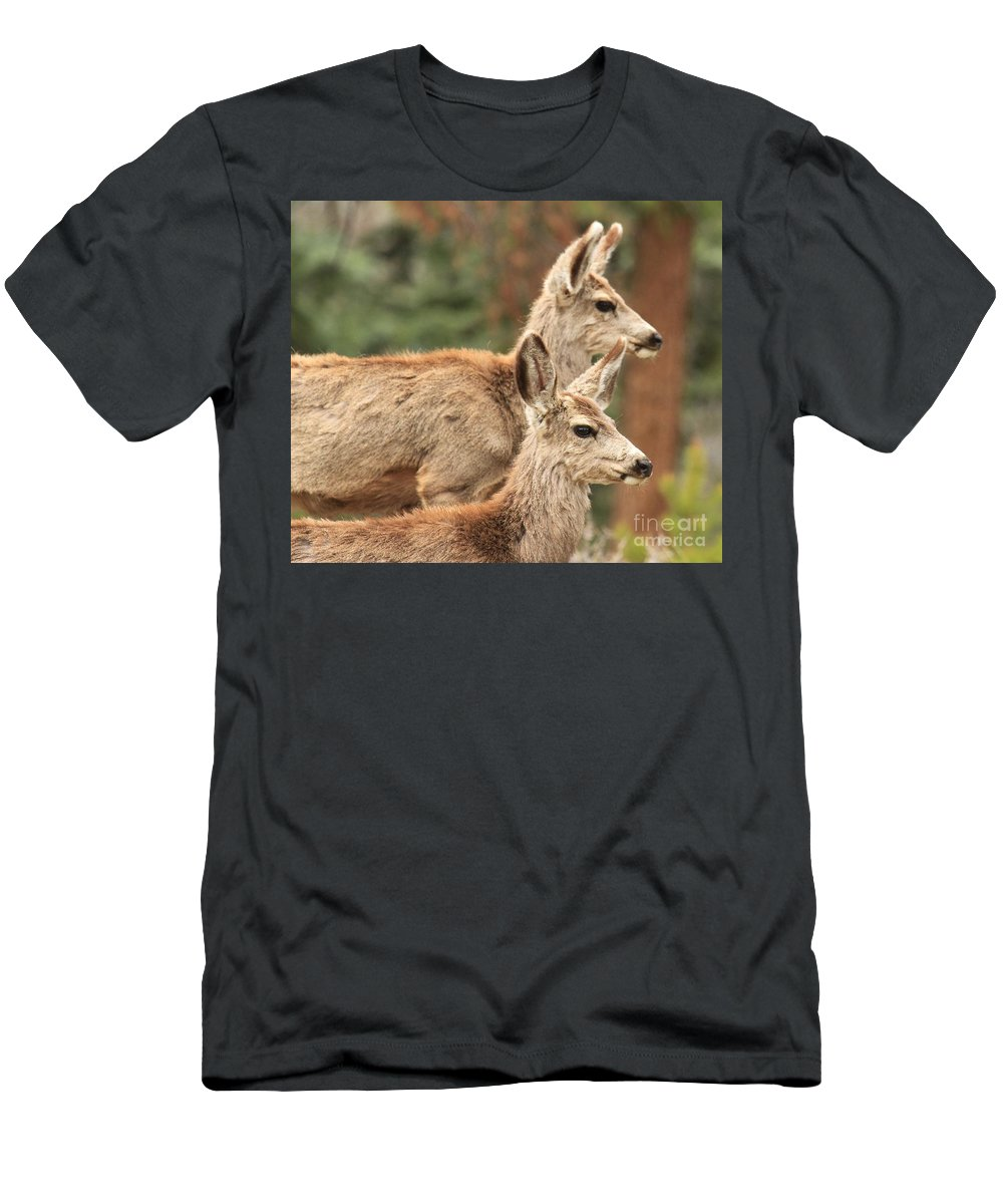 Rocky Mountain National Park Men's T-Shirt (Athletic Fit) featuring the photograph Deer In The Rocky Mountains by Adam Jewell