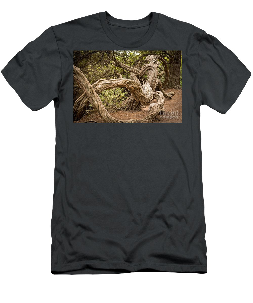 Coastal Tea Tree Men's T-Shirt (Athletic Fit) featuring the photograph Dragon Tree by Kate Brown