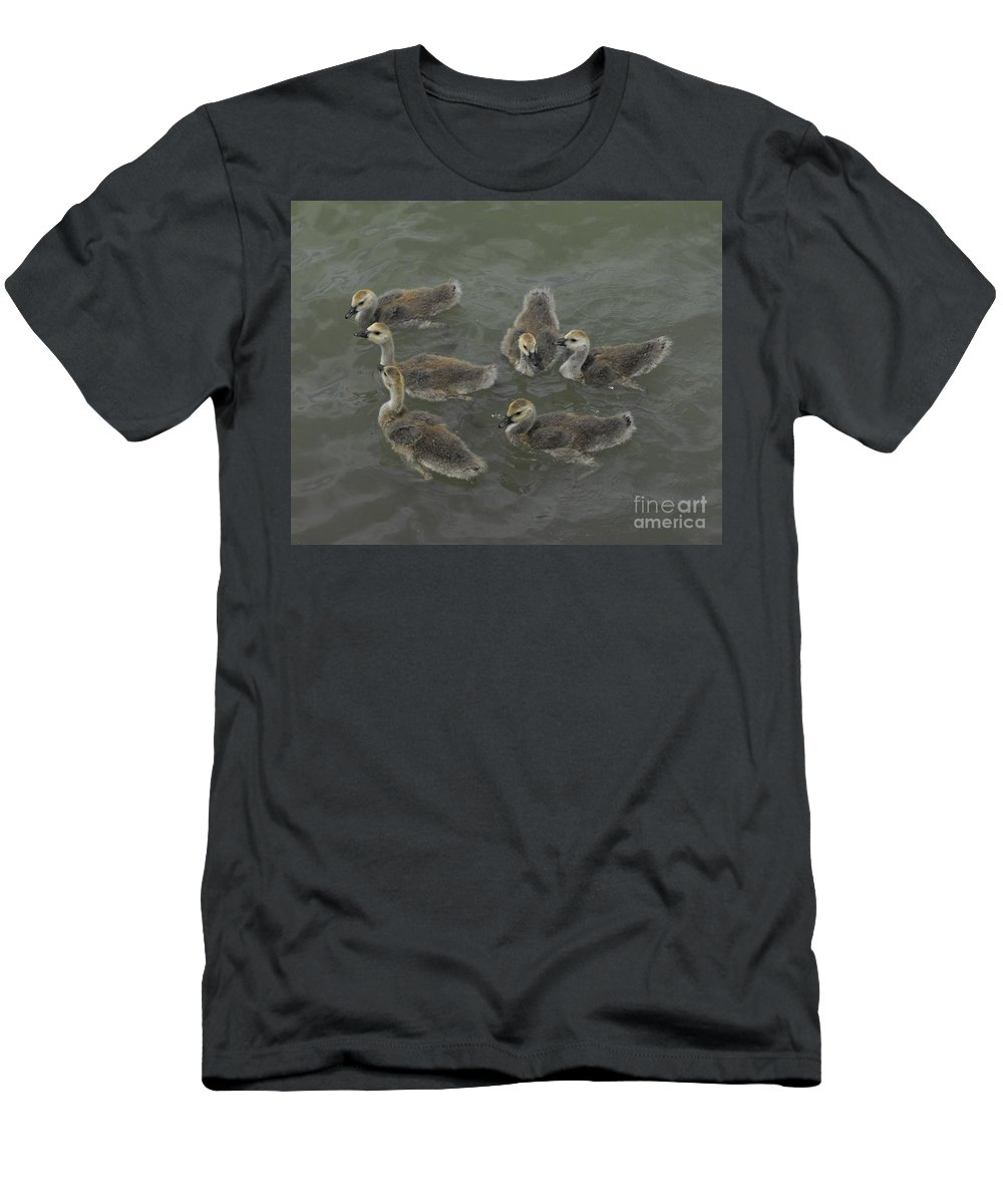 Ducks T-Shirt featuring the photograph Ducklings by Brandi Maher