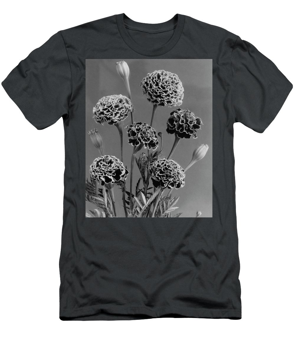 Flowers Men's T-Shirt (Athletic Fit) featuring the photograph Dwarf Monarch Marigolds by J. Horace McFarland