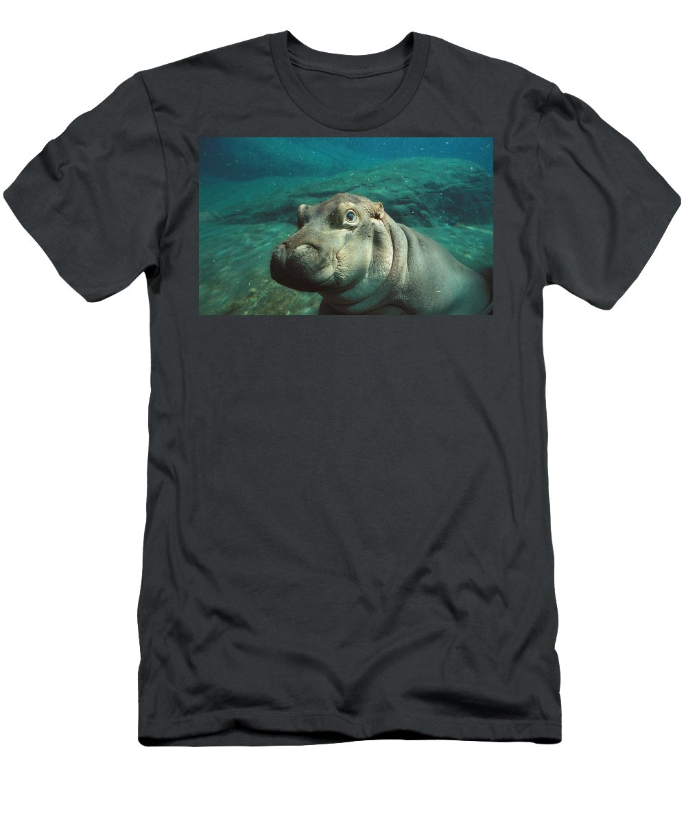 Feb0514 Men's T-Shirt (Athletic Fit) featuring the photograph East African River Hippopotamus Baby by San Diego Zoo