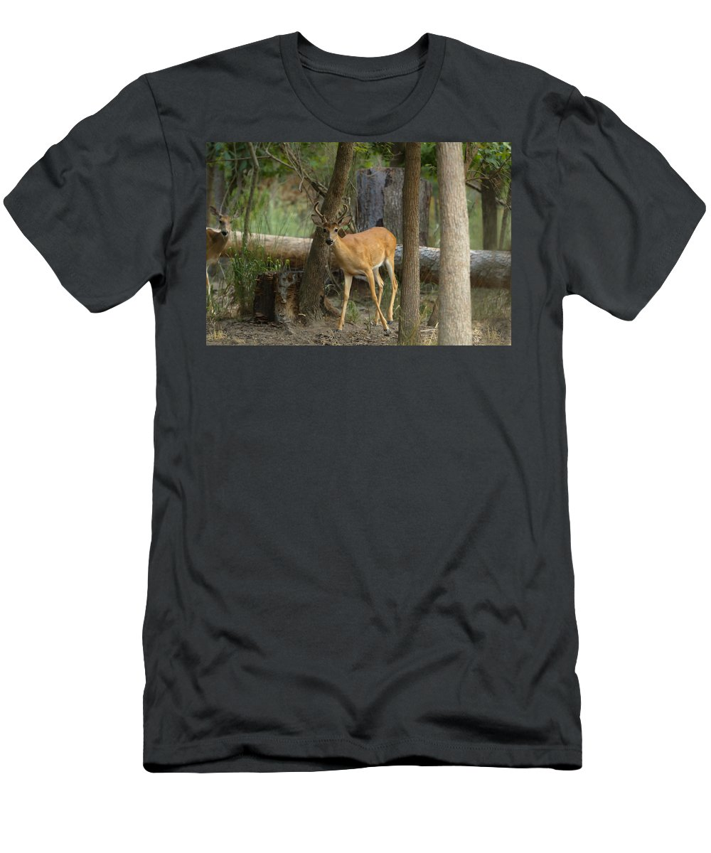 Buck Men's T-Shirt (Athletic Fit) featuring the photograph East Texas Whitetail by Kim Henderson