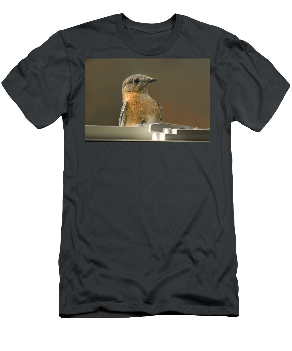 Eastern Men's T-Shirt (Athletic Fit) featuring the photograph Eastern Bluebird Eye To Eye by Kathy Clark